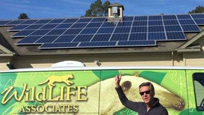 Everybody Solar Goes Wild